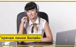 Горячая линия Билайн – связь с оператором с мобильного бесплатно